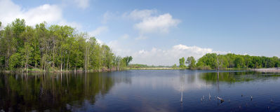 Marsh pond panorama Royalty Free Stock Image