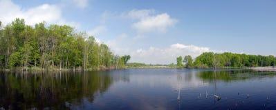 Marsh pond panorama Royalty Free Stock Image