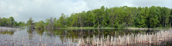 Marsh pond panorama Royalty Free Stock Images