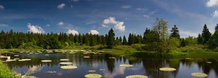 Marsh and pond at the Vogelsberg mountain range Stock Images