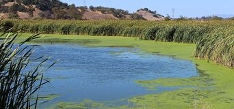 Marsh Ponds in San Rafael, California Stock Image