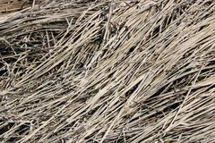 Marsh Reed Background Pattern imagens de stock royalty free