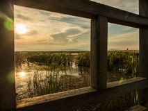 The marsh and reeds in bridge frame. The marsh and reeds at sunset in wooden bridge frame Royalty Free Stock Photo