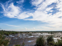 Marsh with reeds. Widely marsh with reeds and bule sky Royalty Free Stock Images