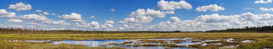 Marsh river Stock Photos