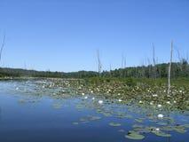 Marsh Scene Michigan Stock Images