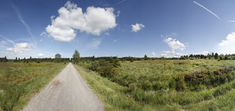 Marsh scenery. Typical marsh/moorland in the national park Hautes Fagnes in the South of Belgium. Panorama shot royalty free stock photo