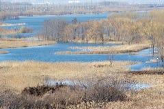 Marsh scenery Stock Photos