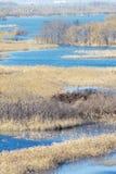 Marsh scenery Stock Photo