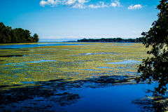 Marsh. This is a scenic shot off the marsh looking into the river Stock Photos