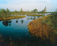 Marsh See stockfotografie
