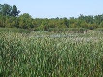 Marsh Stock Images