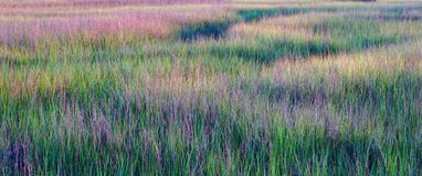 Marsh at Shem Creek Park Royalty Free Stock Images