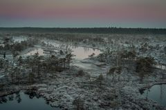 Marsh with small pine trees covered in early winter morning frost Royalty Free Stock Image