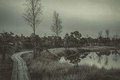 Marsh with small pine trees covered in early winter morning Stock Images