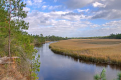 Marsh in South Carolina. A View of the Marsh in Summer in South Carolina stock images