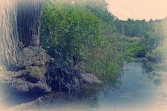 Marsh Stream Royalty Free Stock Photos