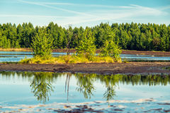 Marsh in summer. Lithuania land Royalty Free Stock Photos