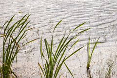 Marsh Stock Photography
