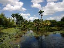 Marsh. Tropical marsh in Playa Larga Cuba Stock Photos