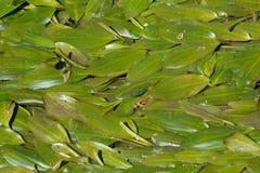 Marsh vegetation Royalty Free Stock Photography