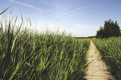 Marsh vegetation. In the south of France Stock Photos