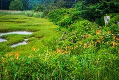 Marsh View Stock Image