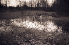 Marsh view. In early spring Stock Images