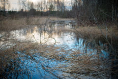 Marsh view. In early spring Royalty Free Stock Photo