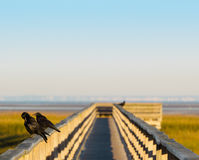 Marsh walkway at dawn with birds and open sky, copy space Stock Photography