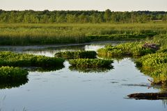Marsh Water And Wetlands Stock Photography