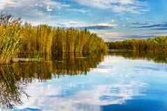 Marsh Royalty Free Stock Image