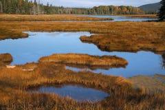 Marshall-Bach, Acadia-Nationalpark Stockbild