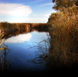 The Marshes Royalty Free Stock Photography