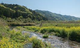 Marshes along Hozugawa River. Green flowery marshes along Hozugawa River. Arashiyama, Kyoto. Japan Stock Photos