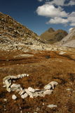 Marshes in Aran Valley, Pyrenees Stock Photography