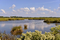 Marshes in the Bay of Arcachon. Near Arès, commune in the Gironde department in southwestern France Stock Photos