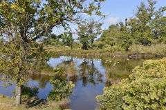 Marshes in the Bay of Arcachon. Near Audenge, commune in the Gironde department in southwestern France Stock Image