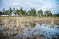 Marshes, Estonia. Marshes, swamps and bogs in Estonia Stock Photo