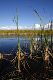 The marshes at the Florida Everglades Stock Images