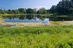 Marshes and Lake at Arboretum Stock Photos
