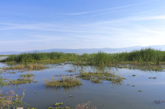 Marshes of Lake Chapala in Mexico Stock Image