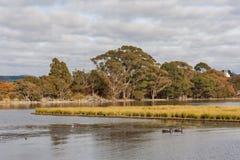Marshes on lake Rotorua Stock Photography