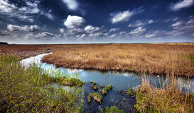 Marshes and reed Stock Image