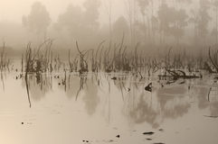 Marshes. Remains of trees in the fog of the marsh Royalty Free Stock Images