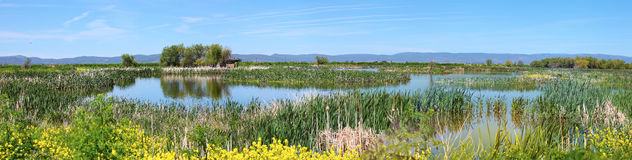 Marshes in South Oregon. Royalty Free Stock Photo