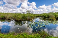 Cloudy day at Everglades National Park. The marshes, swamps, and wetlands of the Everglades are home to some of the most interesting wildlife and vegetation stock photo