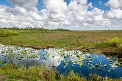Cloudy day at Everglades National Park. The marshes, swamps, and wetlands of the Everglades are home to some of the most interesting wildlife and vegetation stock photos