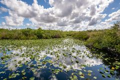 Cloudy day at Everglades National Park. The marshes, swamps, and wetlands of the Everglades are home to some of the most interesting wildlife and vegetation stock image