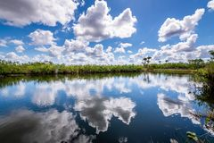 Cloudy day at Everglades National Park. The marshes, swamps, and wetlands of the Everglades are home to some of the most interesting wildlife and vegetation stock images